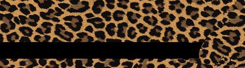 【Be-Sanctuary】ベンガル猫専門ブリーダー
