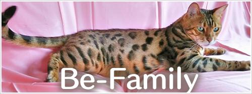 ベンガル猫専門ブリーダーBe-Sanctuaryのファミリーです!