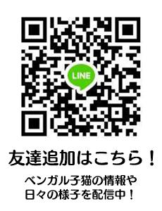 ベンガル猫専門ブリーダーBeSanctuary LINE登録